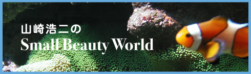 山崎浩二のSmall Beauty World
